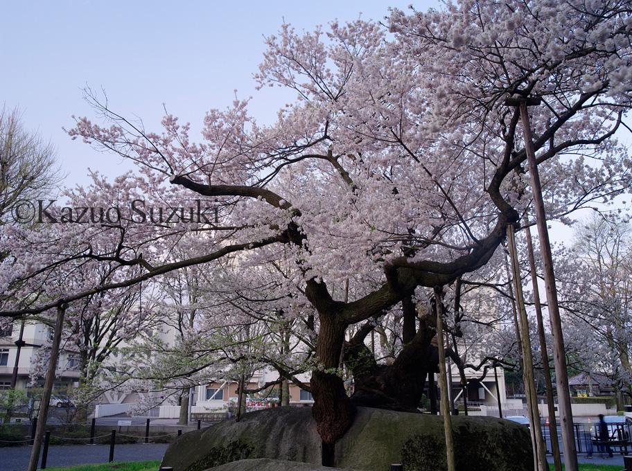 2013年写真展『櫻乃物語』