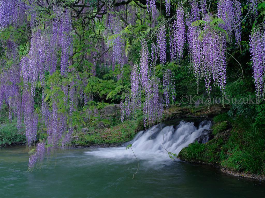 日本花列島