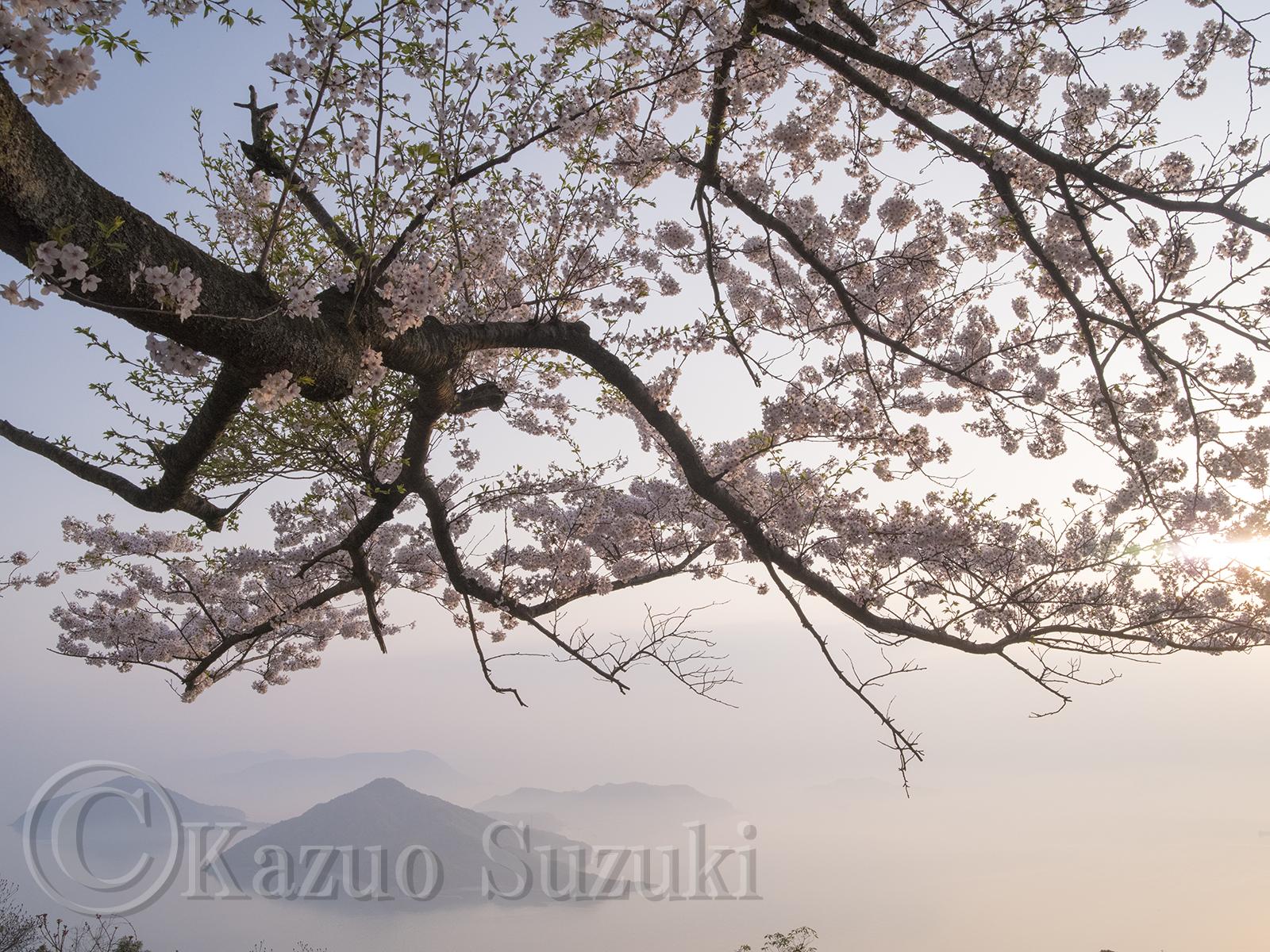 2018年桜旅